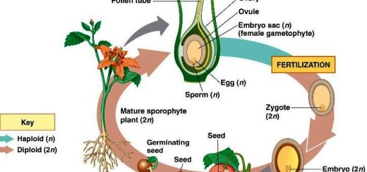 Reproductive stages in plants