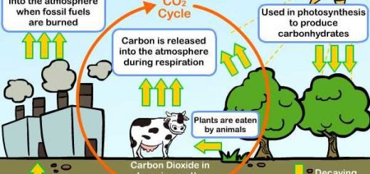 Sources of carbon dioxide gas