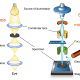 Electron microscope and optical microscope