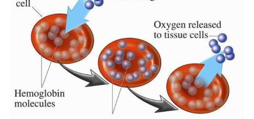 Roles of red cells in oxygen transport