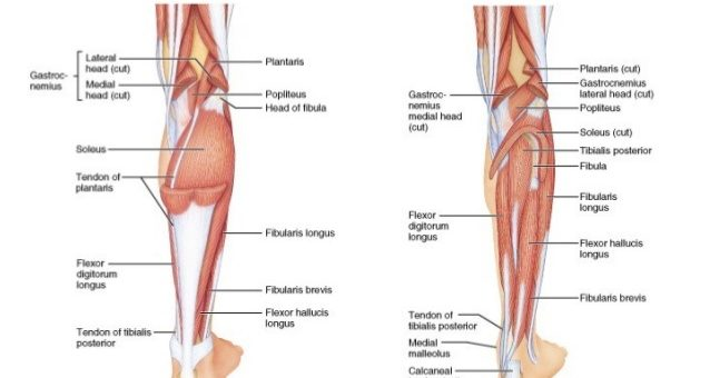 Thigh structure